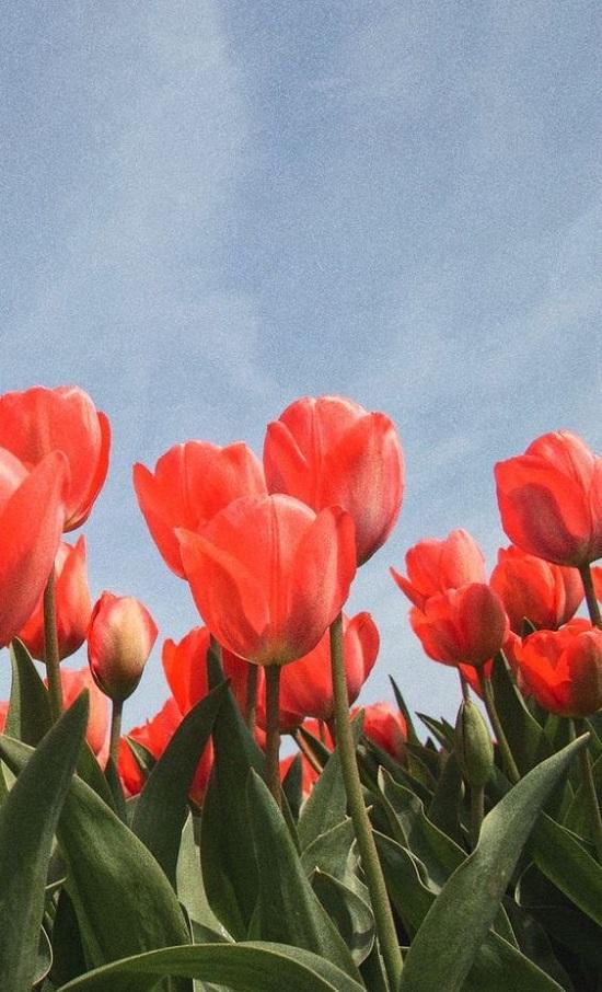 แจกวอลเปเปอร์โทรศัพท์รูปดอกไม้ พร้อมความหมายดีๆ